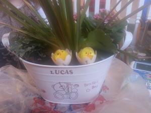 Flowers for Lucas
