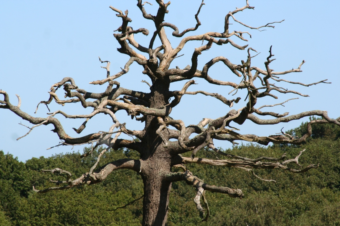 The Tree of theDead