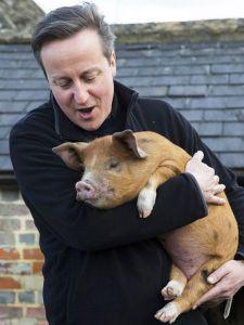 David-Cameron-pig-350573