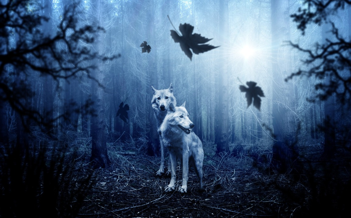 Where the White Wolves Dance