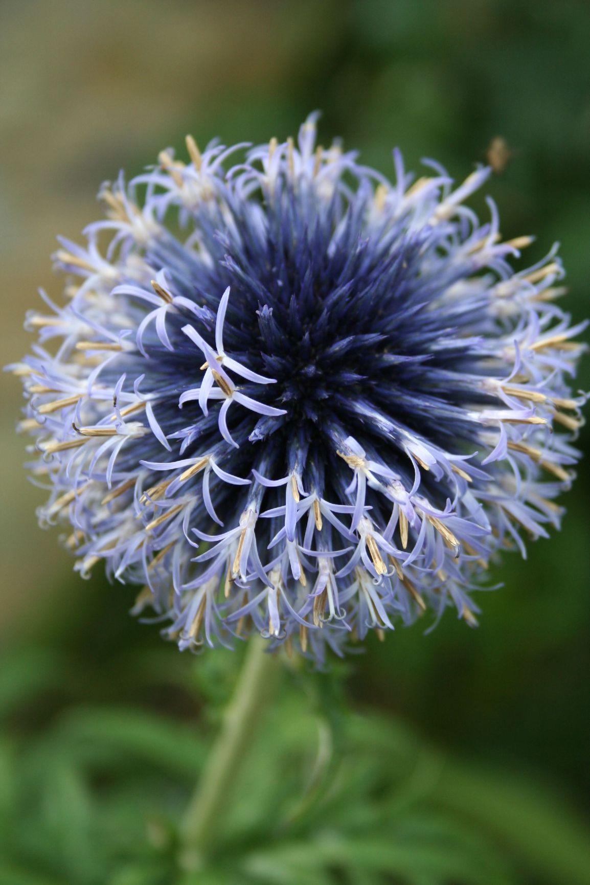 Bloom – Wordless-Wednesday